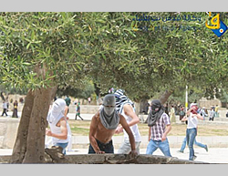 Masked Palestinians riot and confront Israeli police on the Temple Mount (Quds.net, May 16, 2014).
