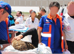 Evacuating wounded Palestinians through the Erez crossing for medical treatment in Turkey (Cogat.idf.il, August 14, 2014).