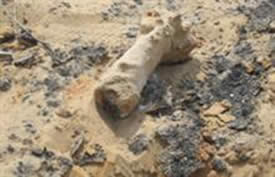 Phosphorus-containing mortar shell which fell in Israeli territory