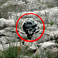 One of the IEDs camouflaged as rocks found in Israel territory in the region between the border fence and the Blue Line (Photo courtesy of the IDF Spokesman).