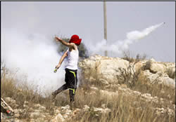A Palestinian rioter at Nebi Saleh throws a Molotov cocktail (Wafa News Agency, August 31, 2012).