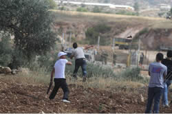 "Palestinian youths throw stones at IDF forces during the ""march of return to the villages of Wadi Latrun,"" west of Ramallah (Paltoday website, June 15, 2013)."