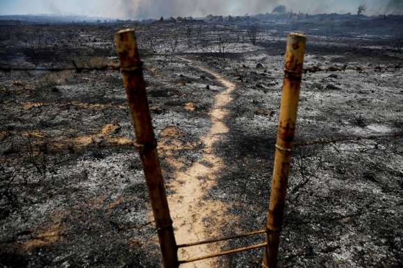 Scorched fields in the western Negev, the result of incendiary kite fires (Shehab Facebook page, June 4, 2018).
