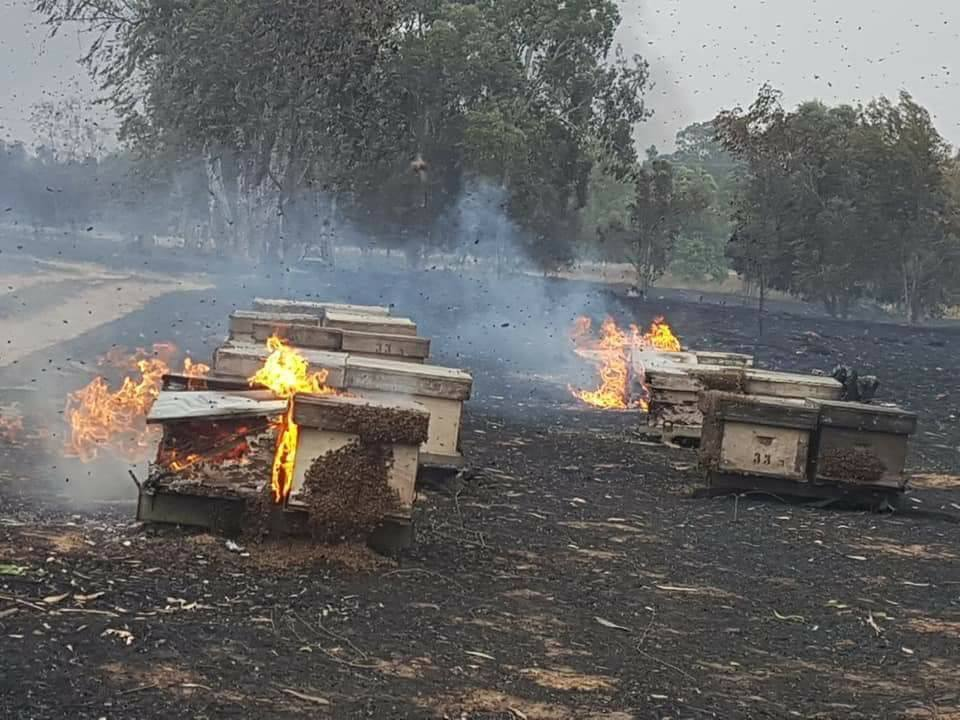 Crops and beehives burn near the Gaza Strip (Facebook page of the