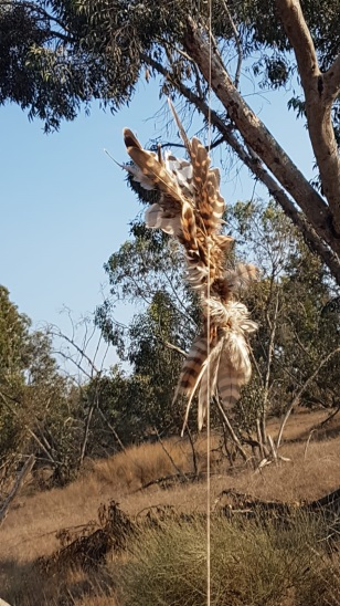 "An ""incendiary falcon"" launched from the Gaza Strip entangled  in a tree (Israeli Nature and Parks Authority, July 17, 2018)."