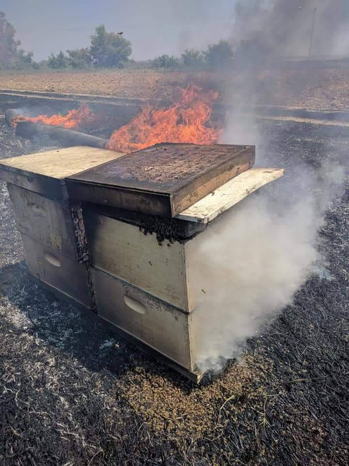 Beehives set on fire by incendiary balloons launched from the Gaza Strip (Palinfo Twitter account, July 18, 2018).