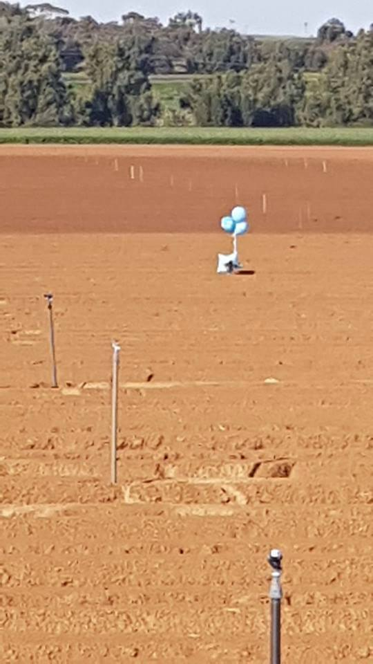 Cluster of balloons with a suspicious object attached launched from the Gaza Strip on February 4, 2018. It landed in an open area in the western Negev (Palinfo Twitter account, February 4, 2019).