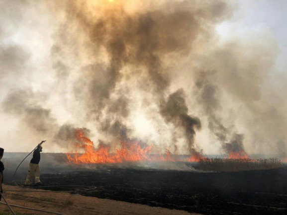 Extinguishing fires set by incendiary balloons in the Israeli communities near the Gaza Strip (Palinfo Twitter account, May 23, 2019).