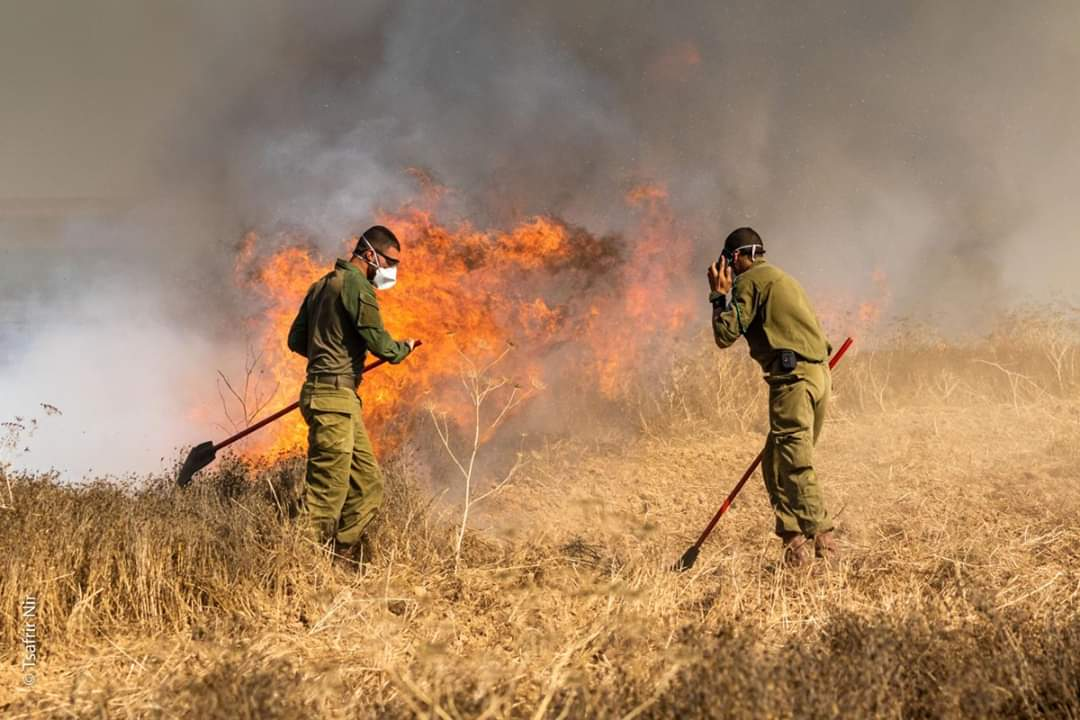 Putting out a fire near the Gaza Strip border, set by incendiary balloons (Twitter account of Mu'ataz Abu Rida, June 14, 2019).