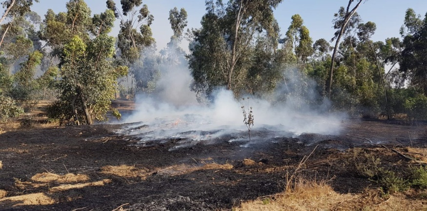 Fire in a forest in the northwestern Negev, six kilometers from the southern Israeli city of Netivot (Jewish National Fund (JNF) forester Moshe Baruchi, June 24, 2019).