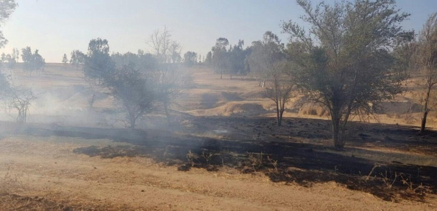 Fire in the Be'eri nature reserve (JNF forester Moshe Baruchi, June 23, 2019).