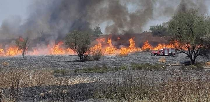 Fire in the Be'eri Forest set by an incendiary balloon (Moshe Baruchi, JNF forester, June 28, 2019).