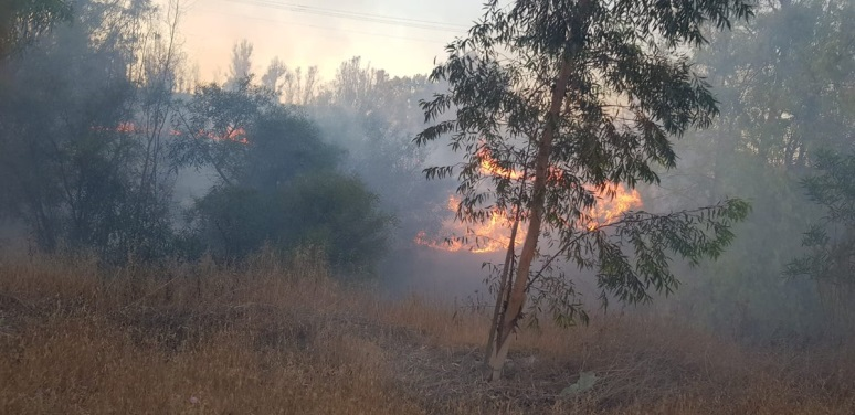 Forest fire caused by incendiary balloons (Right: JNF forester Moshe Baruchi, July 14, 2019).