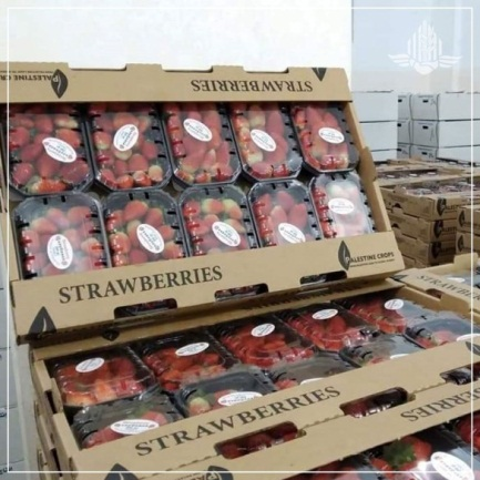 Strawberries from the Gaza Strip ready for export (COGAT Facebook page in Arabic, December 30, 2019).