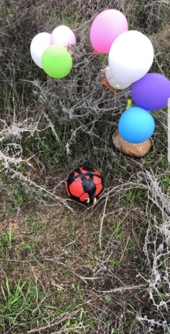 A balloon cluster with a soccer attached that landed in the western Negev (western Negev regional council, January 23, 2020).