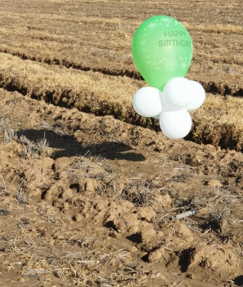 Balloon cluster located in Israeli territory near the Gaza Strip (Israel Police Force, January 30, 2020).