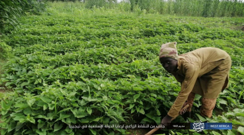Farmers controlled by ISIS work their land (Telegram, August 25, 2021)